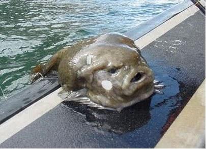 Рыбы--интересности и немножко фото. - Дневники - bigmir)