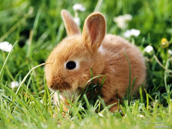 термобелья к чему снится кролик в клетке больше ребенок улице