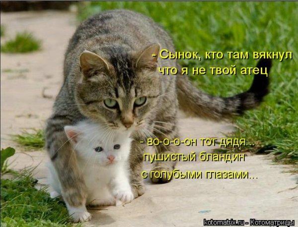 Группа прикольные коты