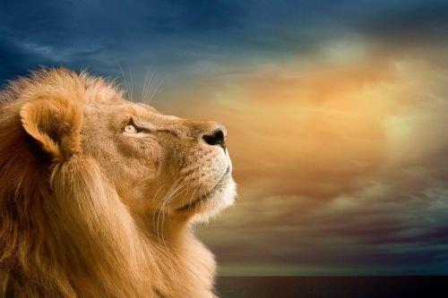 лев и человек на лодке