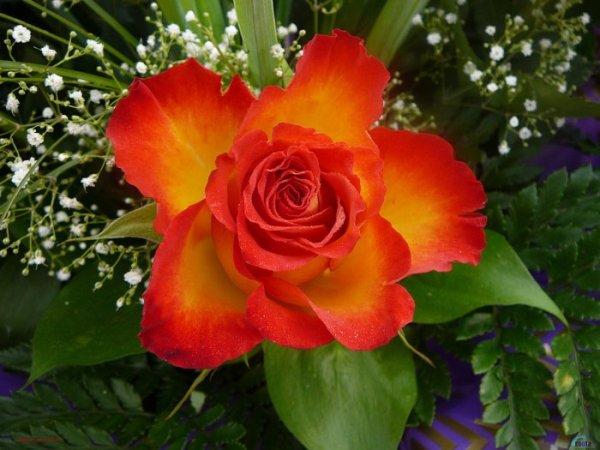 SHOKOLAD_24.  DISAINE.  Recommend us. цветы.
