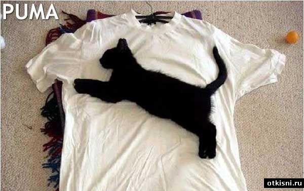 бедный котик