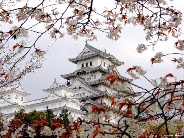 Фото Японии 103096_141075