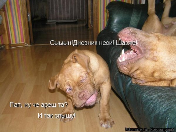http://i.bigmir.net/img/prikol/images/large/4/8/119184_189479.jpg